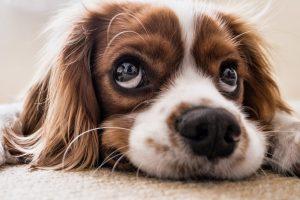 carpet-care-pet-friendly